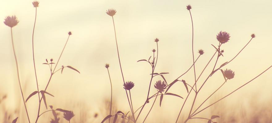 Blommor i dovt solljus