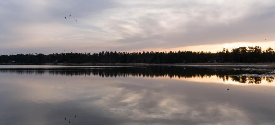 Hav, skog och fåglar i skymningsfärger