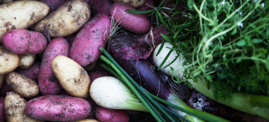 Bild på potatis och grönsaker