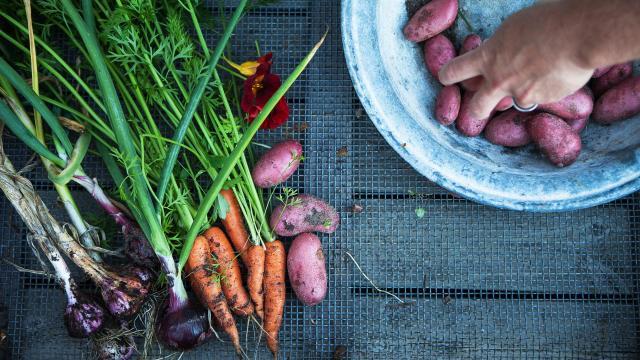 Lokala råvaror, potatis och morötter.